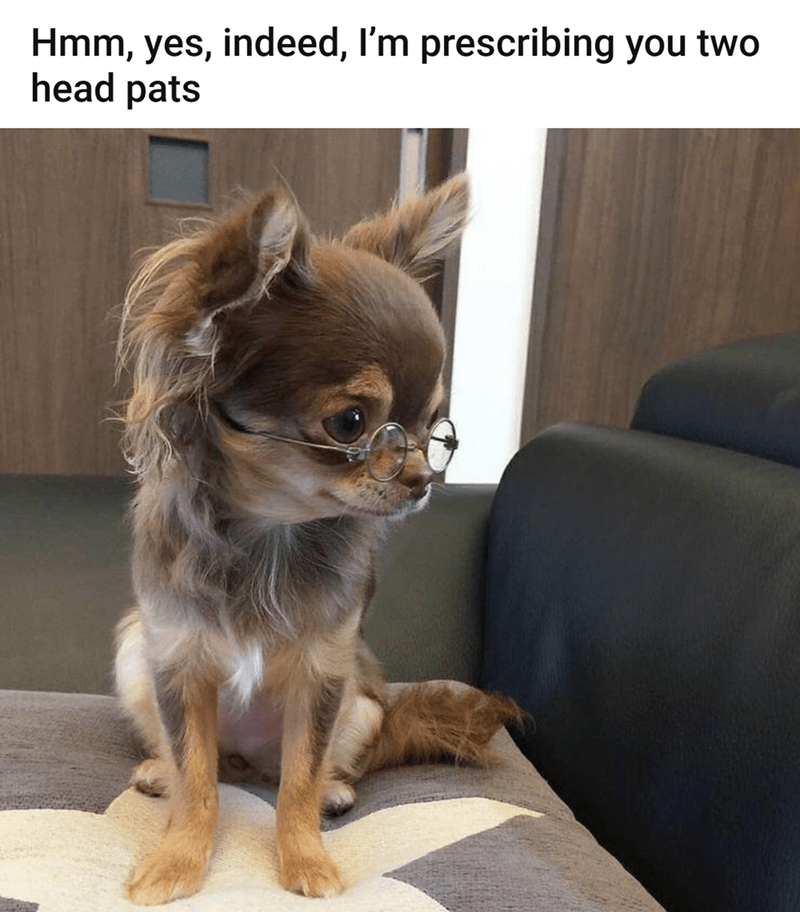 Dog - Hmm, yes, indeed, I'm prescribing you two head pats