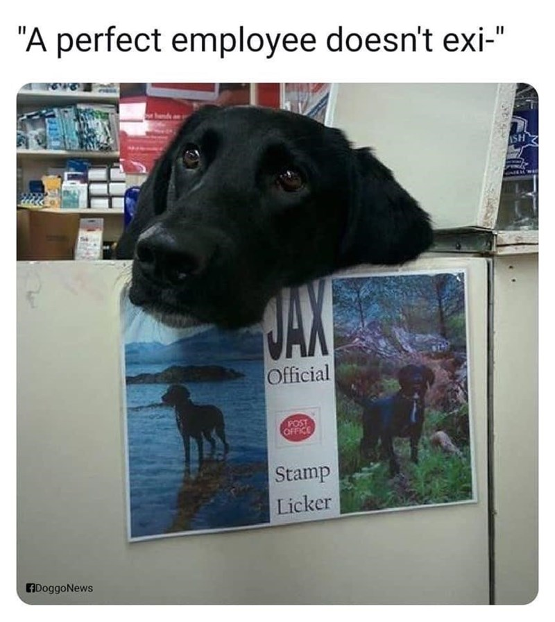 """Dog - """"A perfect employee doesn't exi-"""" 169 ISH HAN Official OFFICE Stamp Licker ADoggoNews"""