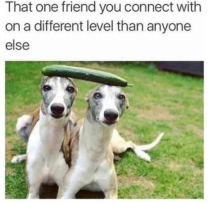Dog - That one friend you connect with on a different level than anyone else