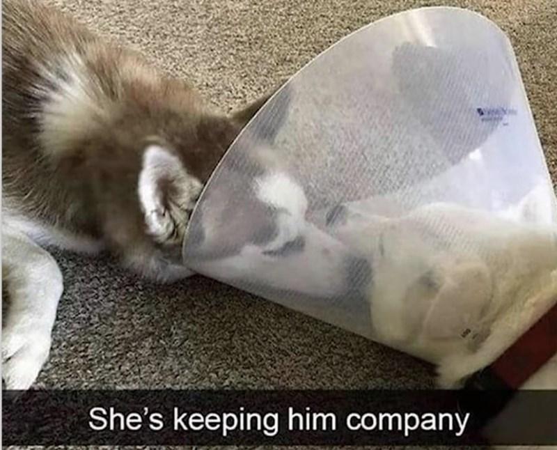 Comfort - She's keeping him company