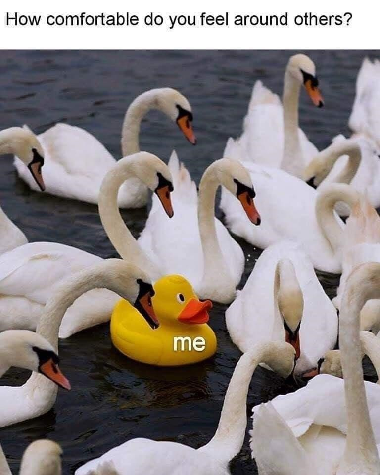 Bird - How comfortable do you feel around others? me