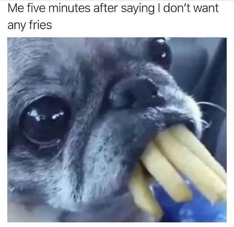 Dog - Me five minutes after saying I don't want any fries