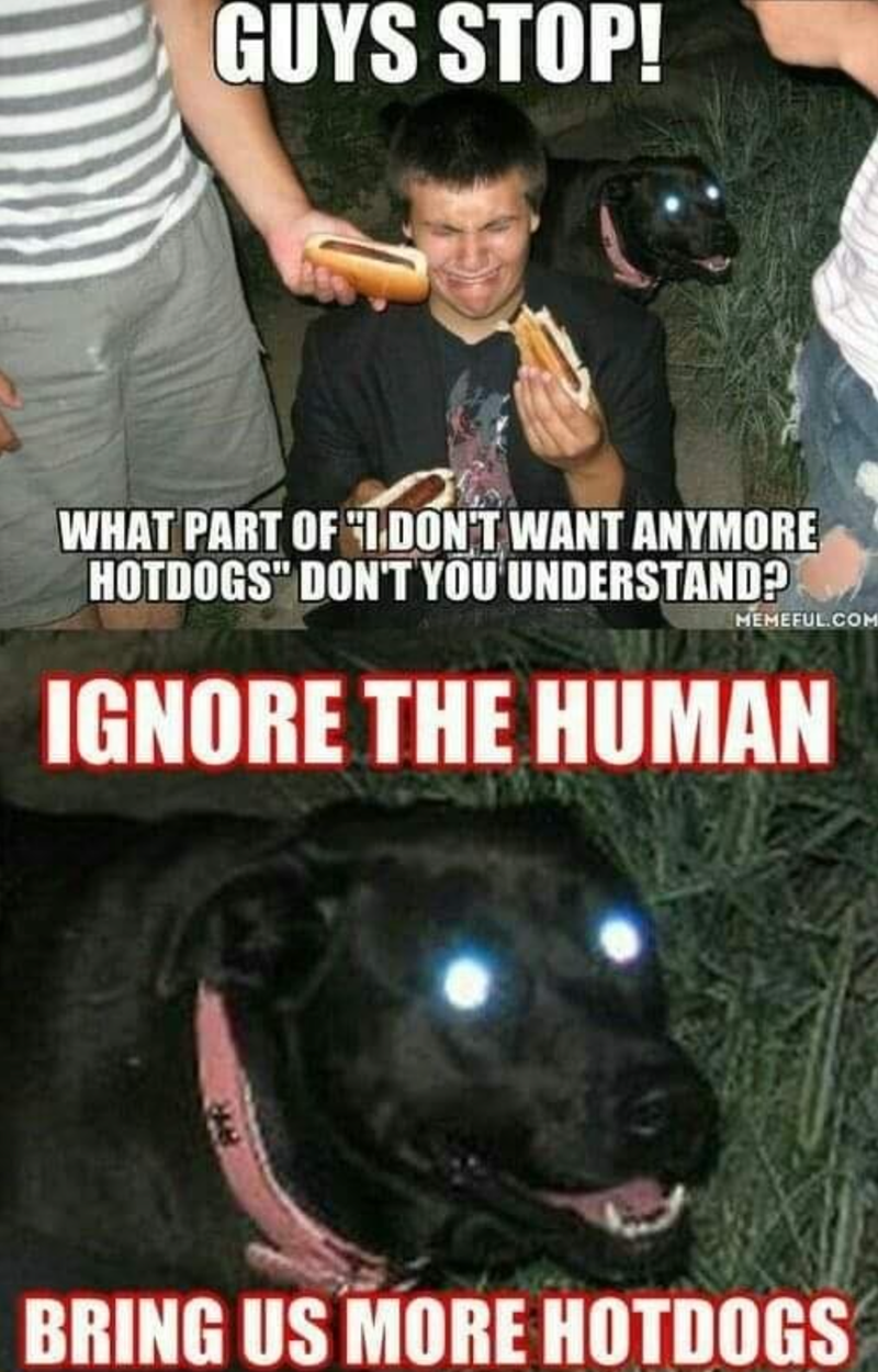 """Clothing - GUYS STOP! WHAT PART OF IDON'T WANT ANYMORE HOTDOGS"""" DON'T YOU UNDERSTAND? MEMEFUL.COM IGNORE THE HUMAN BRING US MORE HOTDOGS"""