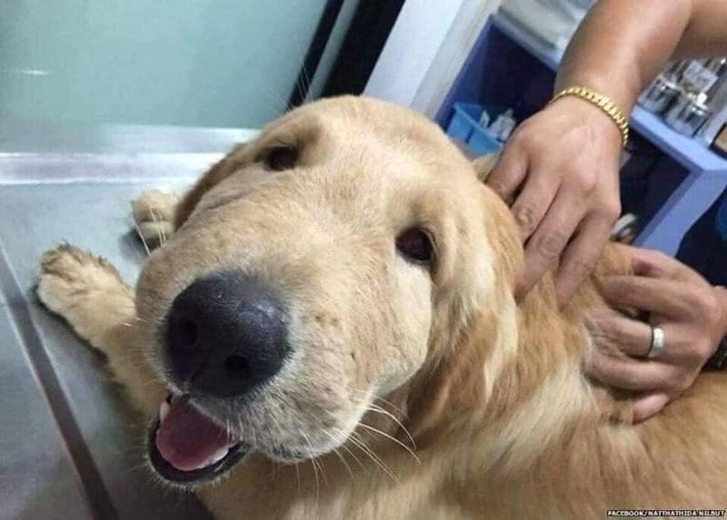 Dog - FACEBOOK/NATTHATHIDANILSUT