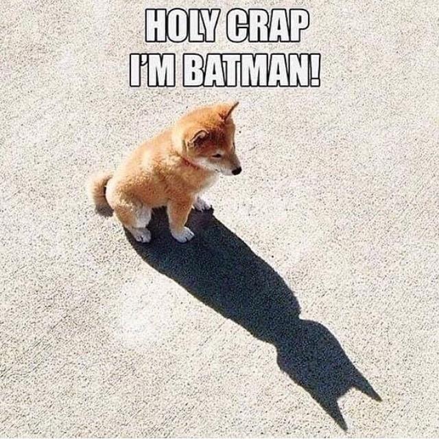 Cat - HOLY CRAP IM BATMAN!