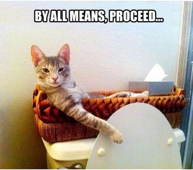 Cat - BYALL MEANS, PROCEED.