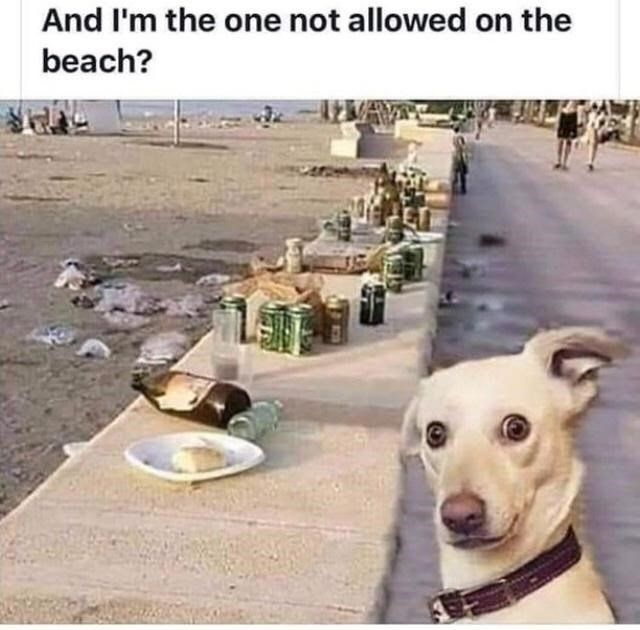 Dog - And I'm the one not allowed on the beach?