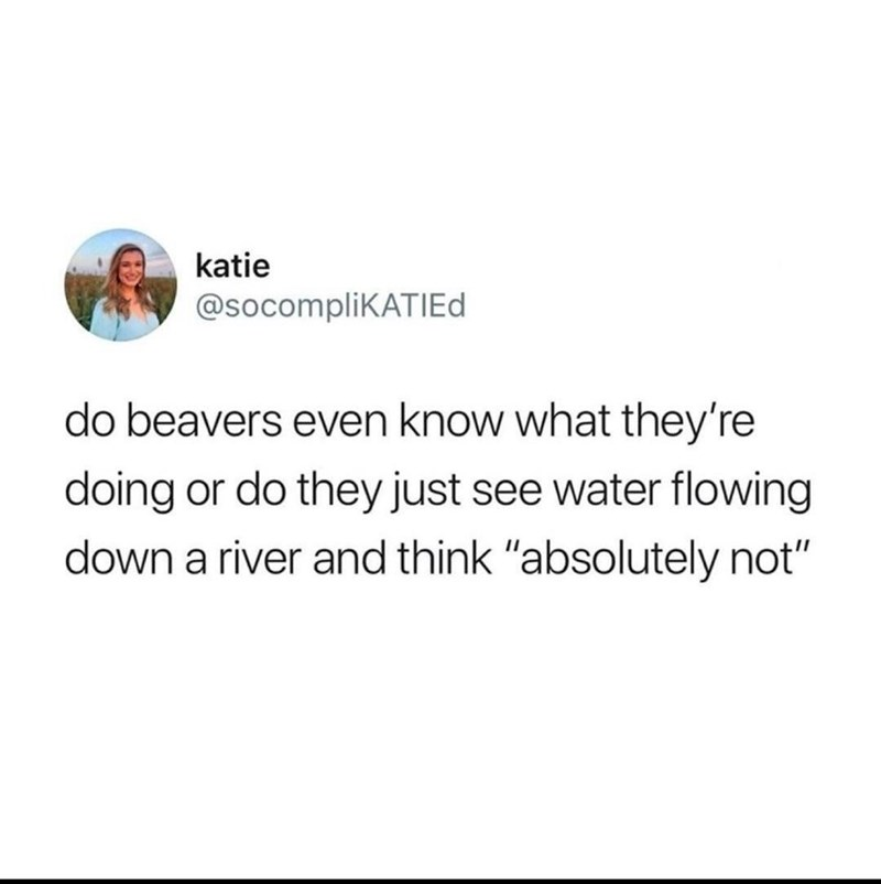 """Font - katie @socomplikATIEd do beavers even know what they're doing or do they just see water flowing down a river and think """"absolutely not"""""""