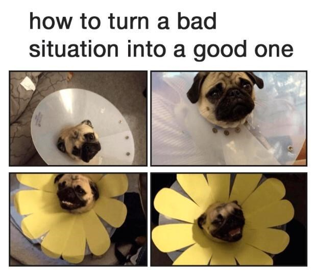 Dog - how to turn a bad situation into a good one