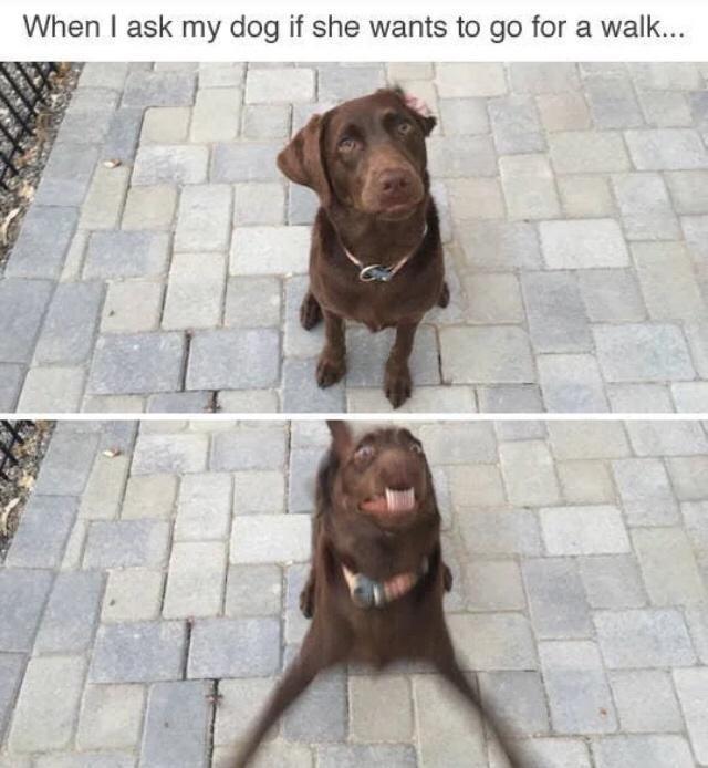 Dog - When I ask my dog if she wants to go for a walk...