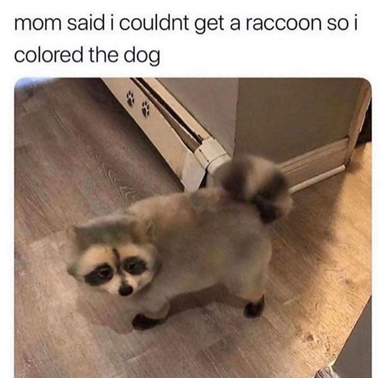 Cat - mom said i couldnt get a raccoon so i colored the dog