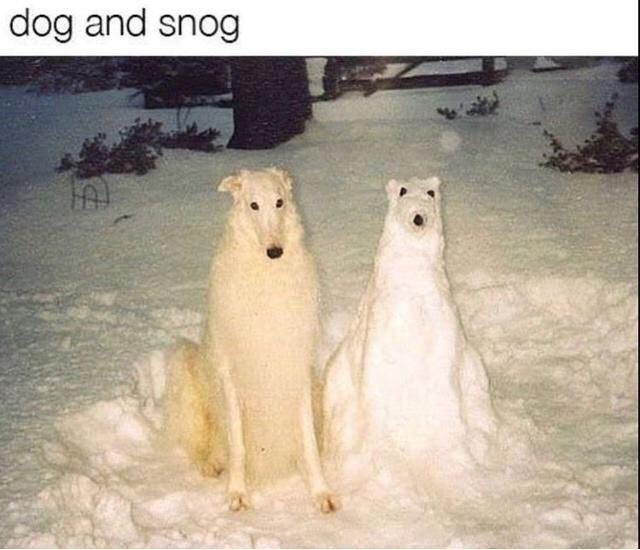 Polar bear - dog and snog