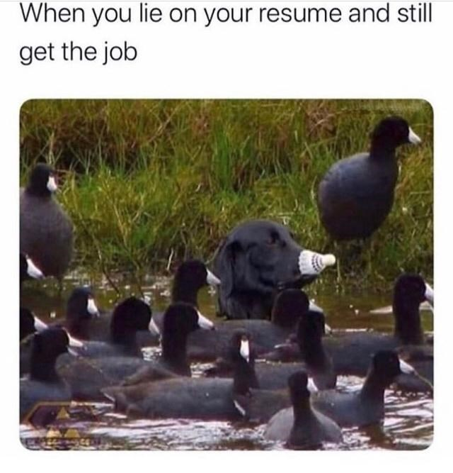 Photograph - When you lie on your resume and still get the job