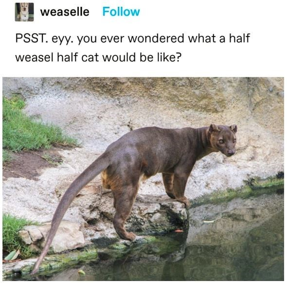 Water - weaselle Follow PSST. eyy. you ever wondered what a half weasel half cat would be like? LEGO