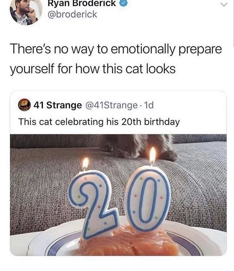 Candle - Ryan Broderick @broderick There's no way to emotionally prepare yourself for how this cat looks 41 Strange @41Strange 1d This cat celebrating his 20th birthday 20 <>