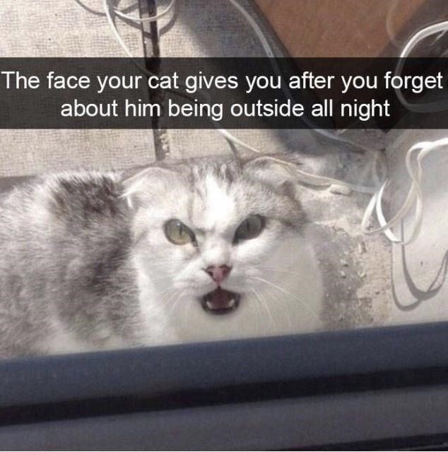 Cat - The face your cat gives you after you forget about him being outside all night