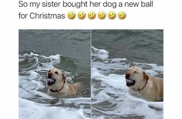 Dog - So my sister bought her dog a new ball for Christmas