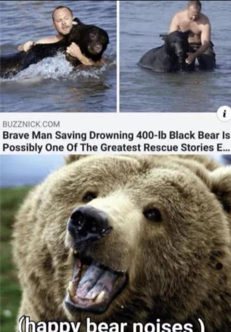 Water - BUZZNICK.COM Brave Man Saving Drowning 400-lb Black Bear Is Possibly One Of The Greatest Rescue Stories E.. (happy bear noises )