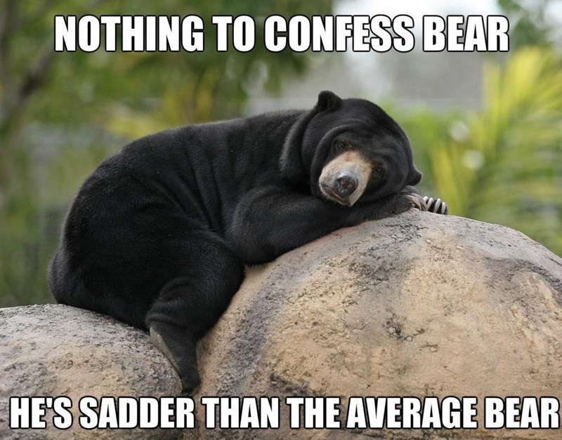 Nature - NOTHING TO CONFESS BEAR HE'S SADDER THAN THE AVERAGE BEAR