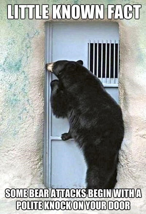 Carnivore - LITTLE KNOWN FACT SOME BEAR ATTACKS BEGIN WITHA POLITE KNOCK ON YOUR DOOR