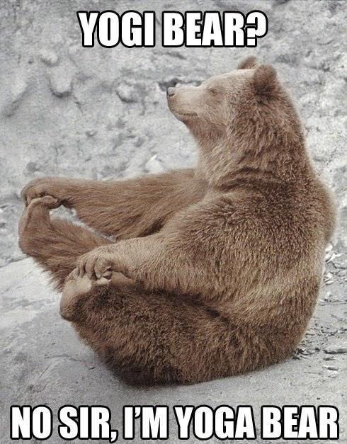 Organism - YOGI BEAR? NO SIR, I'M YOGA BEAR