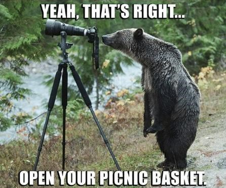 Tripod - YEAH, THAT'S RIGHT. OPEN YOUR PICNIC BASKET.