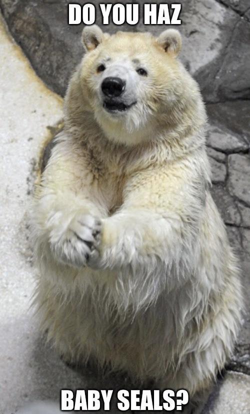 Polar bear - DO YOU HAZ BABY SEALS?