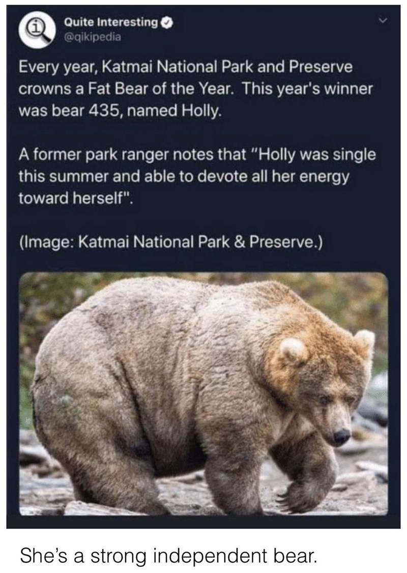 """Ecoregion - Quite Interesting @qikipedia Every year, Katmai National Park and Preserve crowns a Fat Bear of the Year. This year's winner was bear 435, named Holly. A former park ranger notes that """"Holly was single this summer and able to devote all her energy toward herself"""". (Image: Katmai National Park & Preserve.) She's a strong independent bear."""