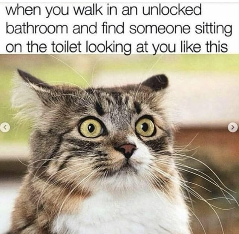 Cat - when you walk in an unlocked bathroom and find someone sitting on the toilet looking at you like this