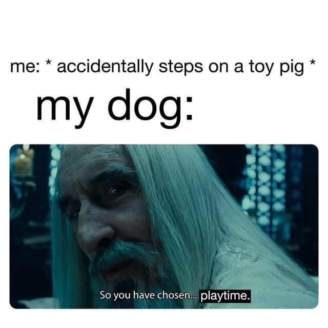 Hairstyle - me: * accidentally steps on a toy pig * my dog: So you have chosen. playtime.
