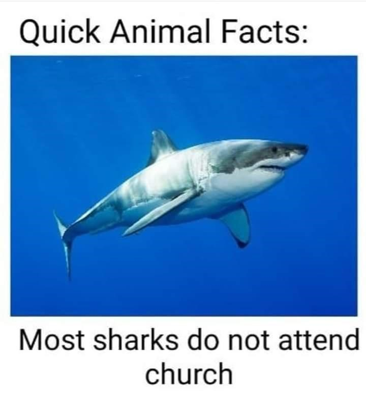 Water - Quick Animal Facts: Most sharks do not attend church