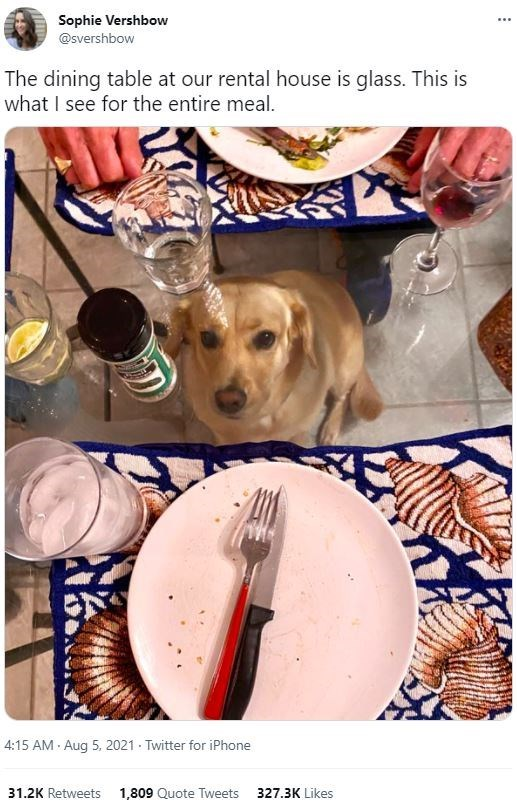 Dog - Sophie Vershbow ... @svershbow The dining table at our rental house is glass. This is what I see for the entire meal. 4:15 AM · Aug 5, 2021 · Twitter for iPhone 31.2K Retweets 1,809 Quote Tweets 327.3K Likes