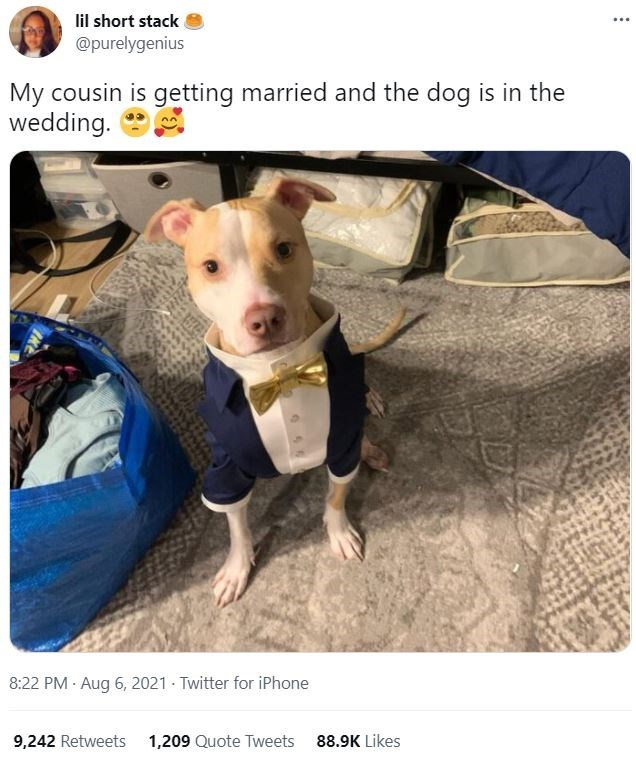 Dog - lil short stack @purelygenius ... My cousin is getting married and the dog is in the wedding. 8:22 PM · Aug 6, 2021 - Twitter for iPhone 9,242 Retweets 1,209 Quote Tweets 88.9K Likes