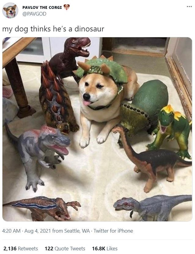 Dog - PAVLOV THE CORGI ... @PAVGOD my dog thinks he's a dinosaur 4:20 AM · Aug 4, 2021 from Seattle, WA - Twitter for iPhone 2,136 Retweets 122 Quote Tweets 16.8K Likes