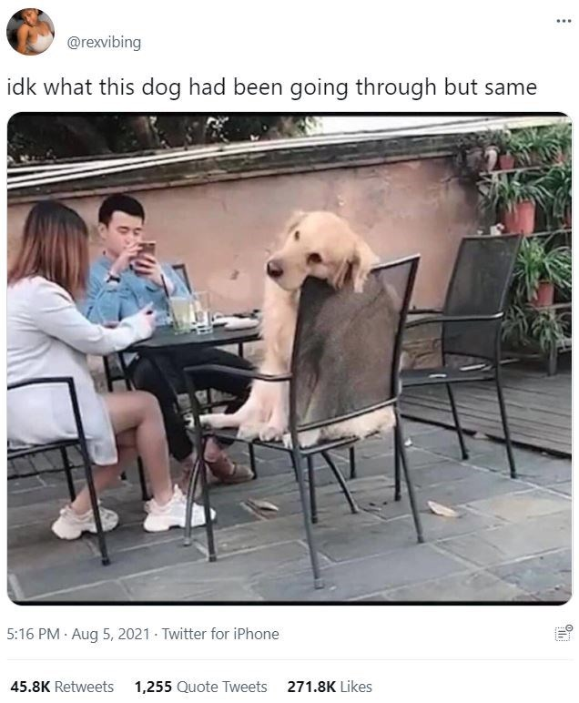 Table - @rexvibing idk what this dog had been going through but same 5:16 PM · Aug 5, 2021 - Twitter for iPhone 45.8K Retweets 1,255 Quote Tweets 271.8K Likes