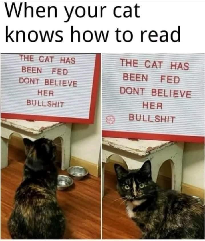 Cat - When your cat knows how to read THE CAT HAS THE CAT HAS BEEN FED BEEN FED DONT BELIEVE DONT BELIEVE HER HER BULLSHIT BULLSHIT