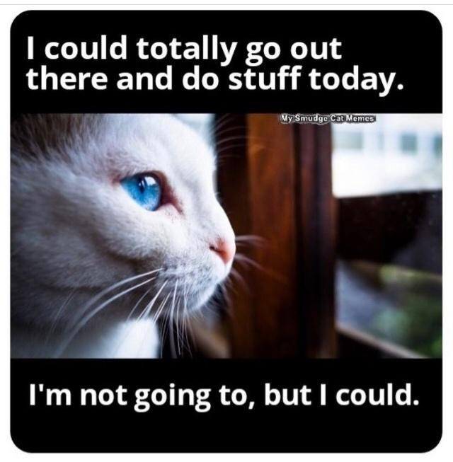 Cat - I could totally go out there and do stuff today. My Smudge Cat Memes I'm not going to, but I could.