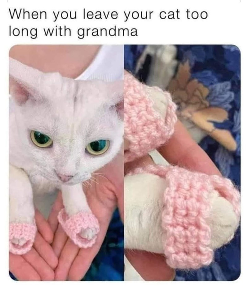 Cat - When you leave your cat too long with grandma