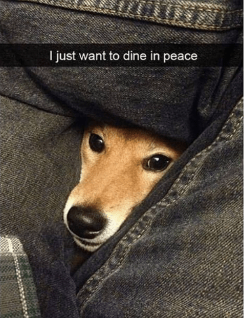 Dog - I just want to dine in peace