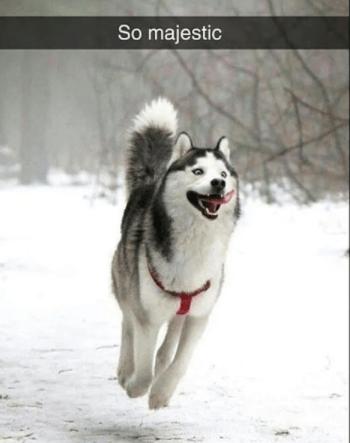 Dog - So majestic