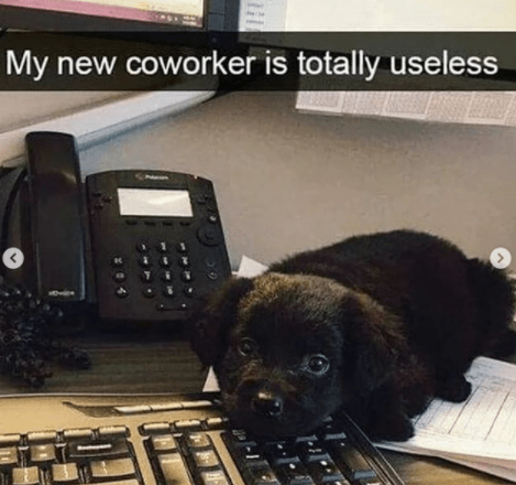 Dog - My new coworker is totally useless