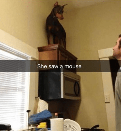 Property - She saw a mouse