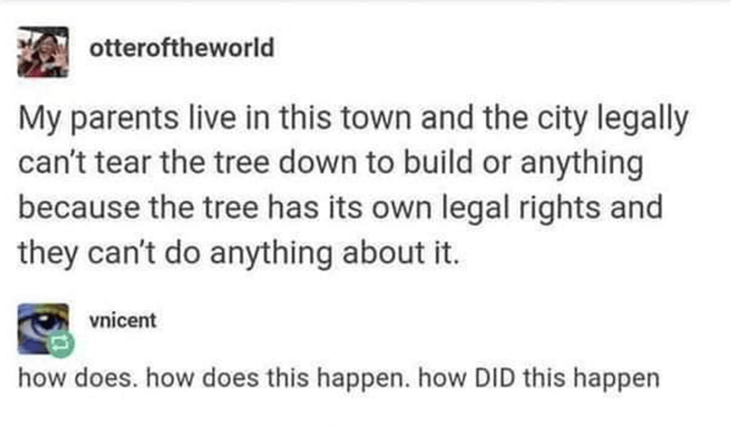 Rectangle - otteroftheworld My parents live in this town and the city legally can't tear the tree down to build or anything because the tree has its own legal rights and they can't do anything about it. vnicent how does. how does this happen. how DID this happen