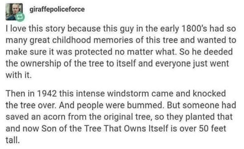 Rectangle - giraffepoliceforce I love this story because this guy in the early 1800's had so many great childhood memories of this tree and wanted to make sure it was protected no matter what. So he deeded the ownership of the tree to itself and everyone just went with it. Then in 1942 this intense windstorm came and knocked the tree over. And people were bummed. But someone had saved an acorn from the original tree, so they planted that and now Son of the Tree That Owns Itself is over 50 feet t