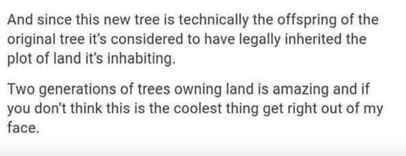 Rectangle - And since this new tree is technically the offspring of the original tree it's considered to have legally inherited the plot of land it's inhabiting. Two generations of trees owning land is amazing and if you don't think this is the coolest thing get right out of my face.