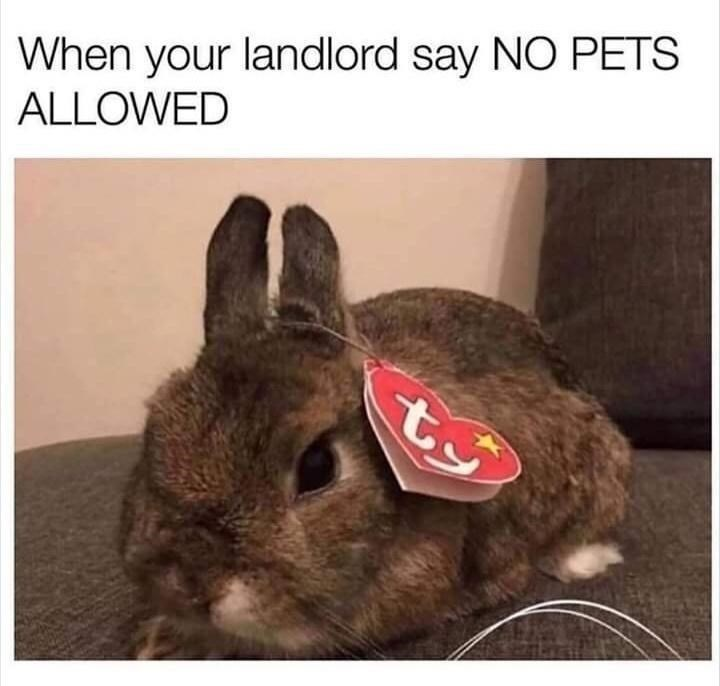 Rabbit - When your landlord say NO PETS ALLOWED t