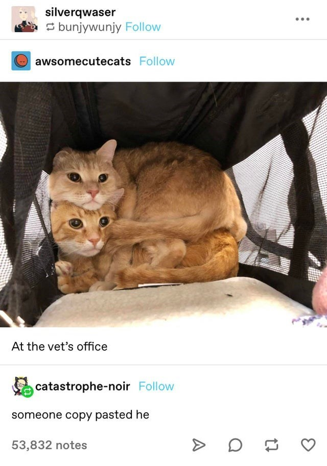 Cat - silverqwaser ... S bunjywunjy Follow Oawsomecutecats Follow At the vet's office catastrophe-noir Follow someone copy pasted he 53,832 notes A