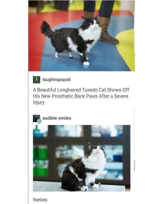 Vertebrate - laughingsquid A Beautiful Longhaired Tuxedo Cat Shows Off His New Prosthetic Back Paws After a Severe Injury audible-smiles feeties