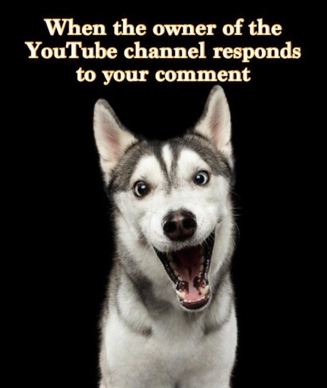 Dog - When the owner of the YouTube channel responds to your comment