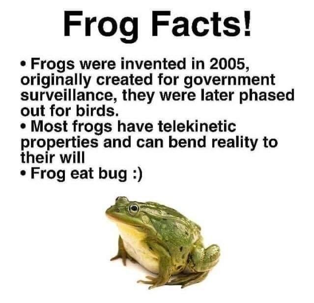 Frog - Frog Facts! Frogs were invented in 2005, originally created for government surveillance, they were later phased out for birds. • Most frogs have telekinetic properties and can bend reality to their will Frog eat bug:)